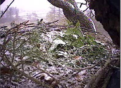 Dec 1 Snow on the nest.