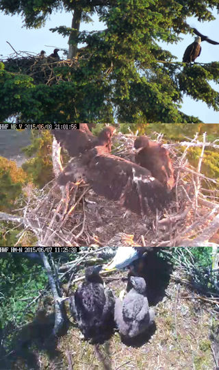 eaglets from Lafarge, White Rock and Harrison Mills