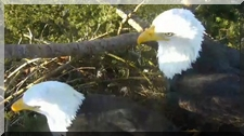 close-up of Delta 3 adult on the East cam