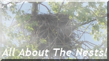 All About the Nests
