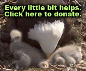 click to donate to Hancock Wildlife