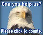 Five Easy Ways to Donate to HWF!