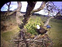 March 15, 2008 Dad Lands in the Nest 4:35 PM