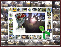 """A memorial """"quilt"""" for Wendybacalar who passed away suddenly on September 18, 2007.    The outside border are some of Wendy's screencaptures of the 2007 Sidney Nest (collage created by ELFNYC).    The next border are avatars of some of the HWF members to which a """"cuke"""" has been added - Wendy's trademark.  The flowers were left by Elle, Ian and Annette, (HWF members) at the nest site.  The centre picture is Skye spreading her wings in joy at the sunrise.  Wendy - we will remember you!"""