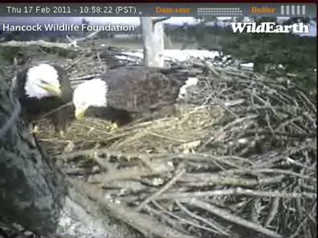 A series of short clips showing Dad moving around (captured from the Sidney EagleCam on February 17, 2010)