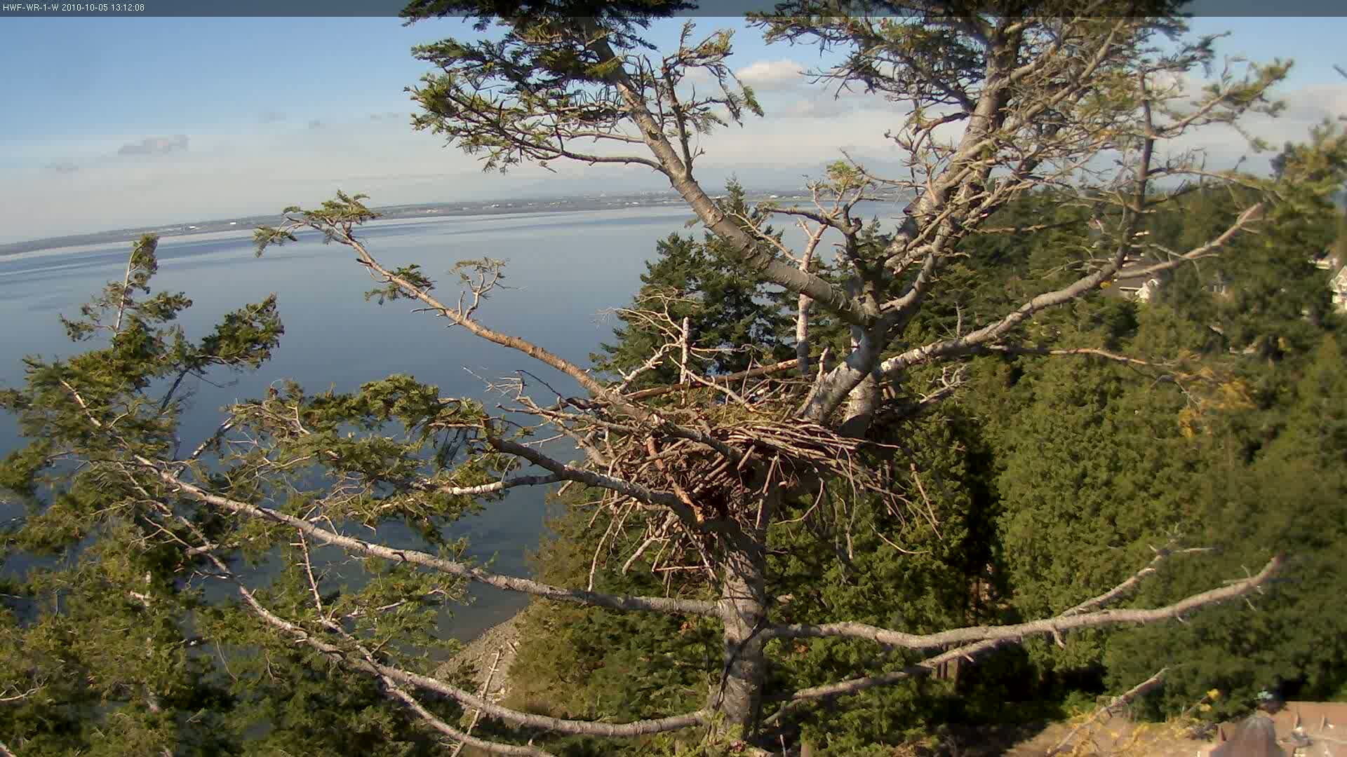 No eagles in this one - but a lovely vista from the camera position overlooking Boundary Bay