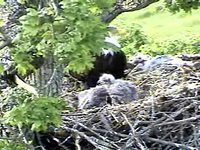 The first view we had of the nest
