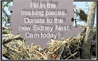 Mom and Dad Saanich of Sidney, the parents of Lil Sidney, Big Victoria and Skye, built a new nest this year. To donate to a camera to be placed in the nest for the 2009 season, call 1-800-938-1114 or paste this link in your browser for other ways to donate:  http://discuss.hancockwildlifechannel.org/viewtopic.php?p=327097#p327097 This is the last week of the campaign.  All equipment must be ordered so that it's available and ready to put in the nest as soon as the Sidney eagles leave for the salmon runs.