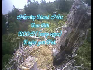 06.18. 1200H(appx) Hornby Eaglet gets Fed